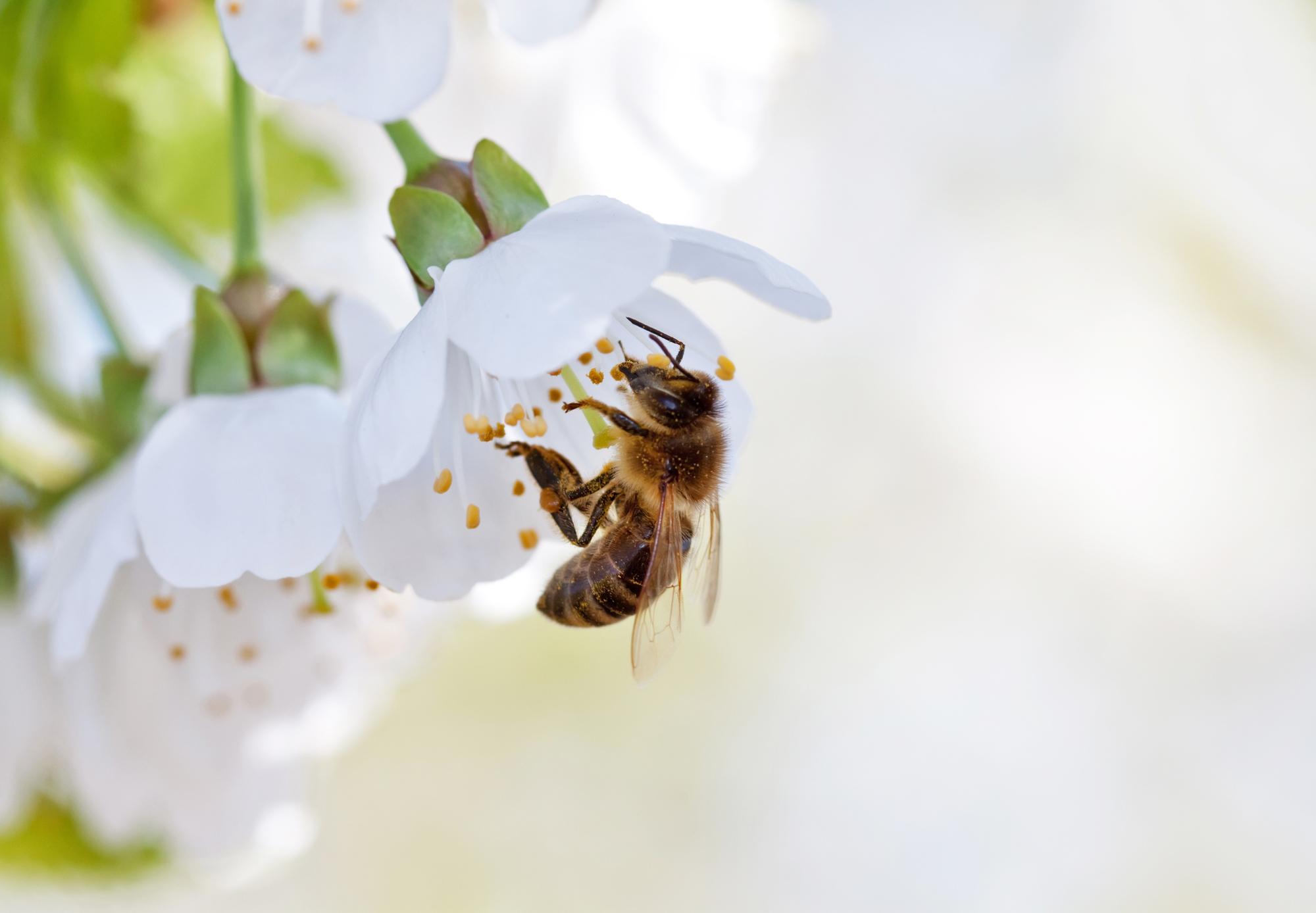 Giornata mondiale delle api 2021