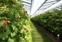 buone pratiche dell'agrivoltaico