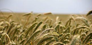 Politica agricola comune: al via l'ultimo negoziato