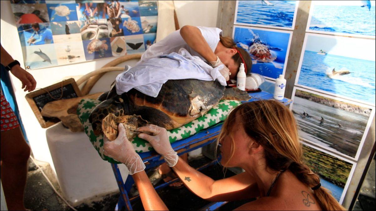Pronto Soccorso per le tartarughe marine