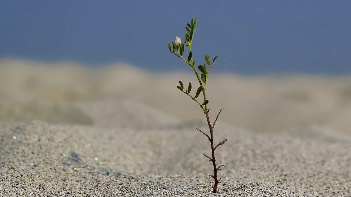 Importazioni agricole: il rischio siccità accerchia l'UE
