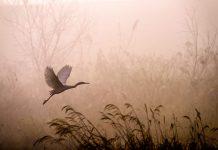 Strategia sulla biodiversità 2030: il parlamento UE alza l'asticella