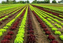 Politica agricola comune: l'UE ascolta solo l'agribusiness