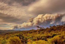 Effetti della pandemia sul clima: pesano di più gli incendi in Australia