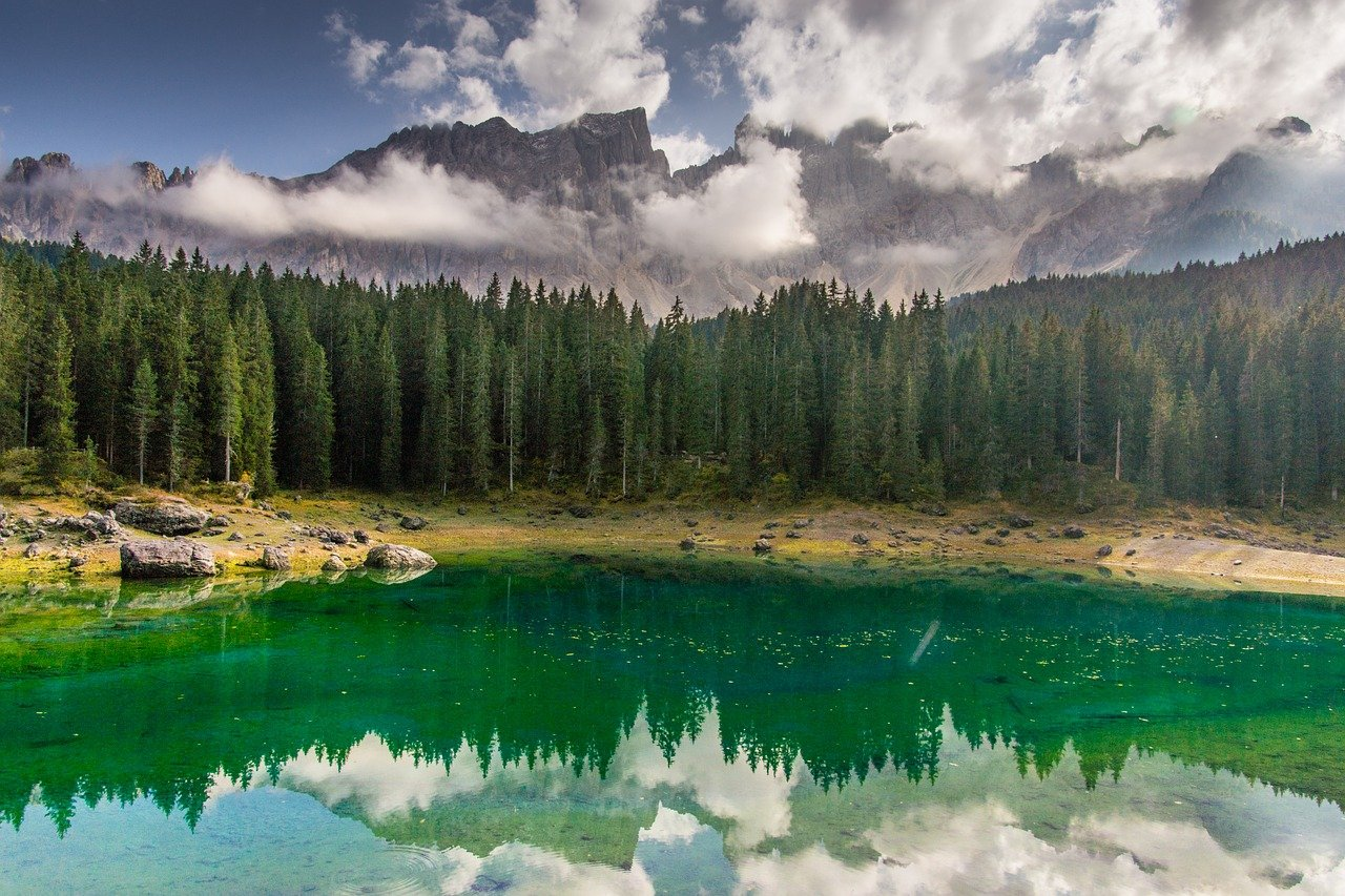 proteggere le foreste europee,