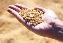 Biofuel insostenibili: 10 anni di disattenzione europea