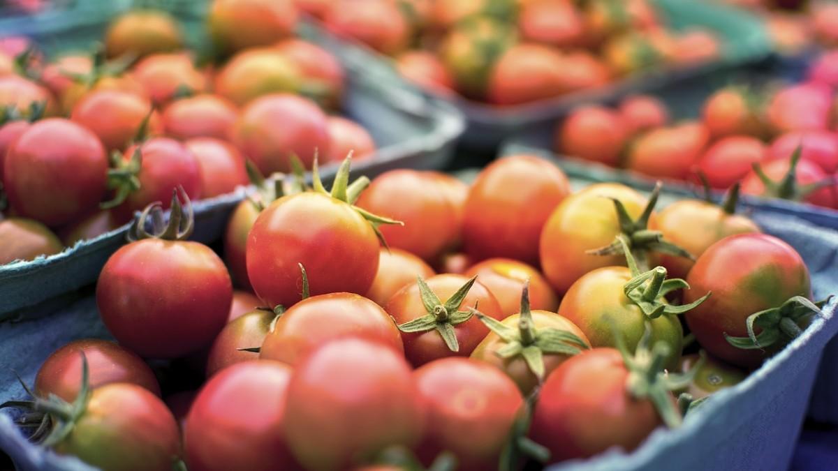 Agroalimentare italiano, nel 2021 bilancio positivo per Confagricoltura