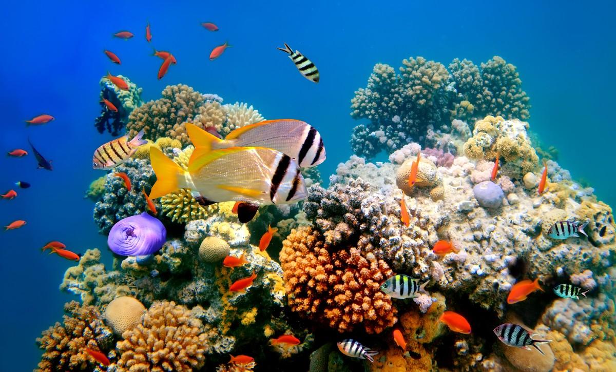 Barriere coralline: tutti i numeri del collasso di questi ecosistemi marini fragili
