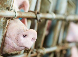 Food Systems Summit: i lobbisti della carne in azione