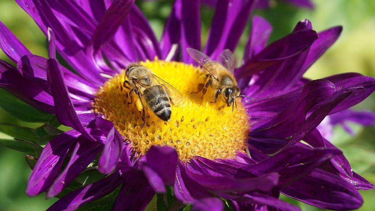 Glifosato: la Francia a processo per mancata tutela della biodiversità