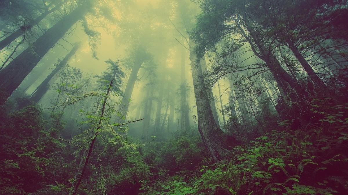 Disboscamento dell'Amazzonia: a settembre cresce la deforestazione