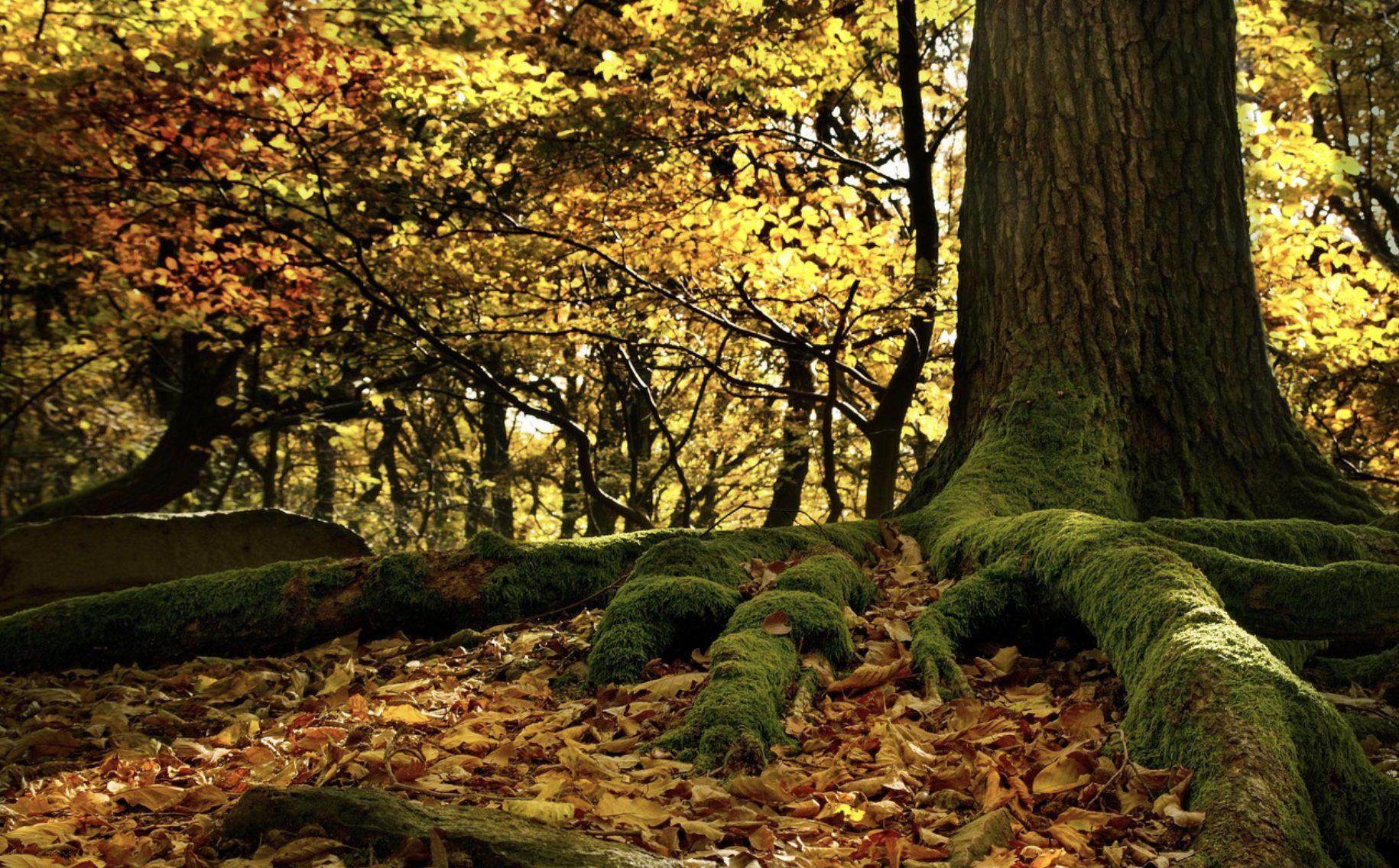 foreste europee